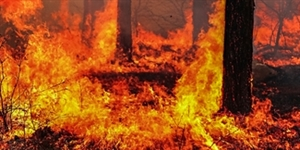 5 Mindblowing Facts About the Yosemite Wildfire