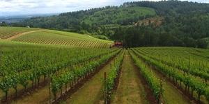 Organic Wine: You Make Me Feel So Fine