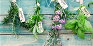 Green Thumb Not Necessary: 5 Easy Herbs to Grow at Home