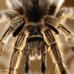 Top 5 Deadliest Spiders