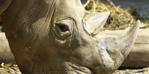 Top 5 Most Endangered Species