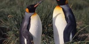 5 Animals That Practice Homosexuality
