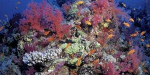 The 5 Largest Coral Reefs in the World