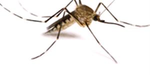 Top 5 Deadliest Bugs