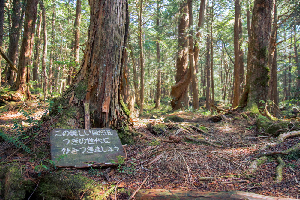 aokigahara japan places terrifying