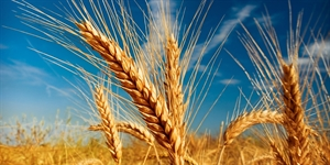 5 Wheat Ales You Should Be Drinking