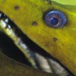 Top 5 Ugliest Underwater Creatures