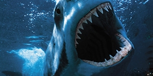 The Top 5 Most Terrifying Shark Attacks