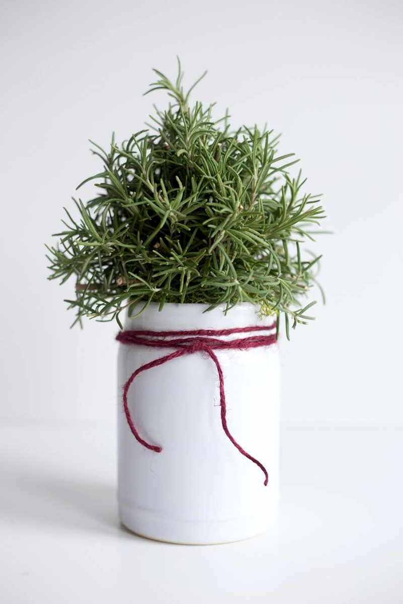 Edible Plant - An easy Christmas DIY gift