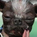 Top 5 Ugliest Dog Breeds