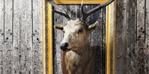 The Top 5 Strangest Examples of Taxidermy