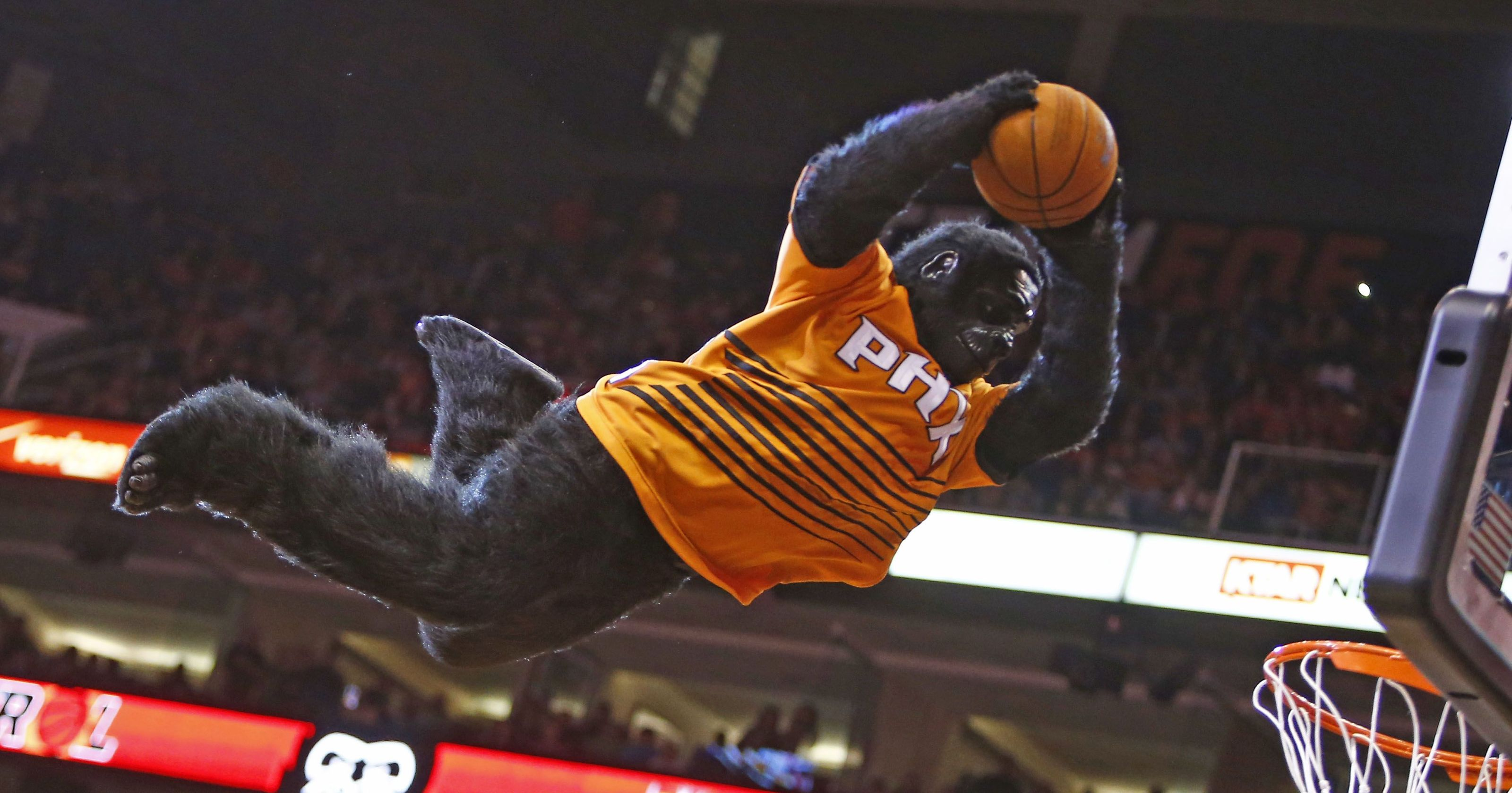 Phoneix Suns Gorilla is one of the coolest mascots in Basketball history