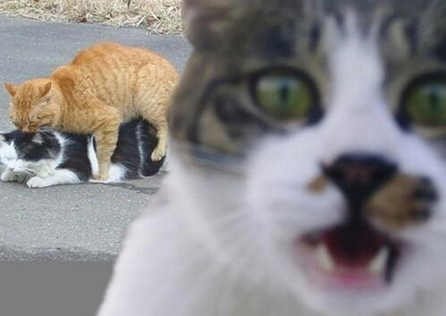 This is probably one of the best photobombs of all time featuring only animals