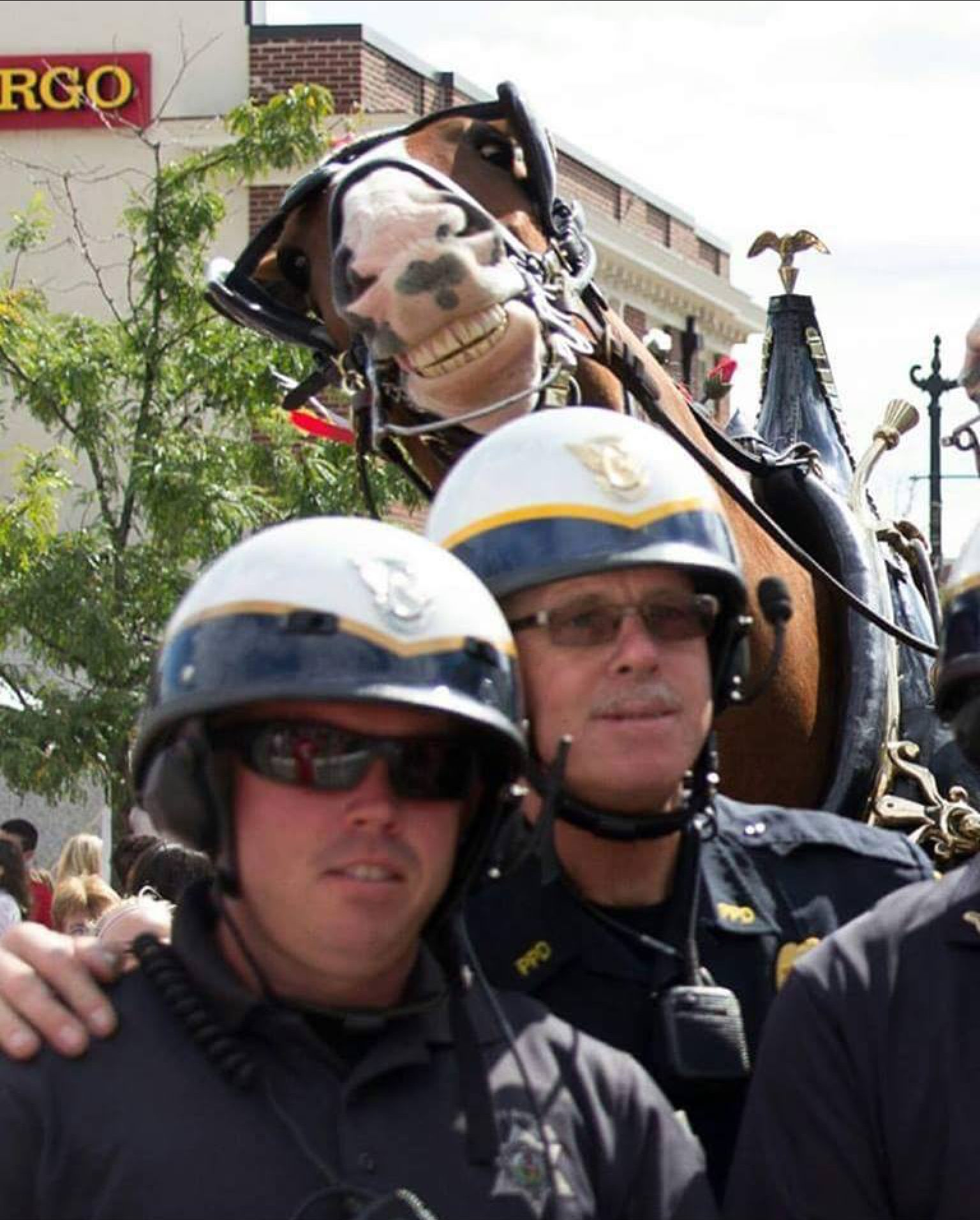 One of the best horse photobombs ever