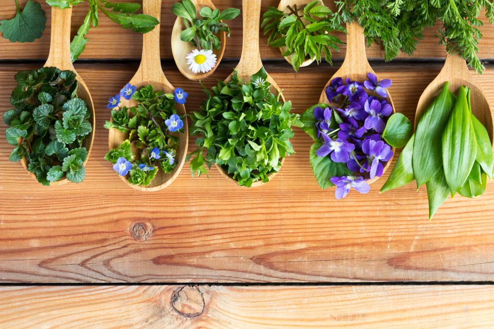 edible plants in disneyland