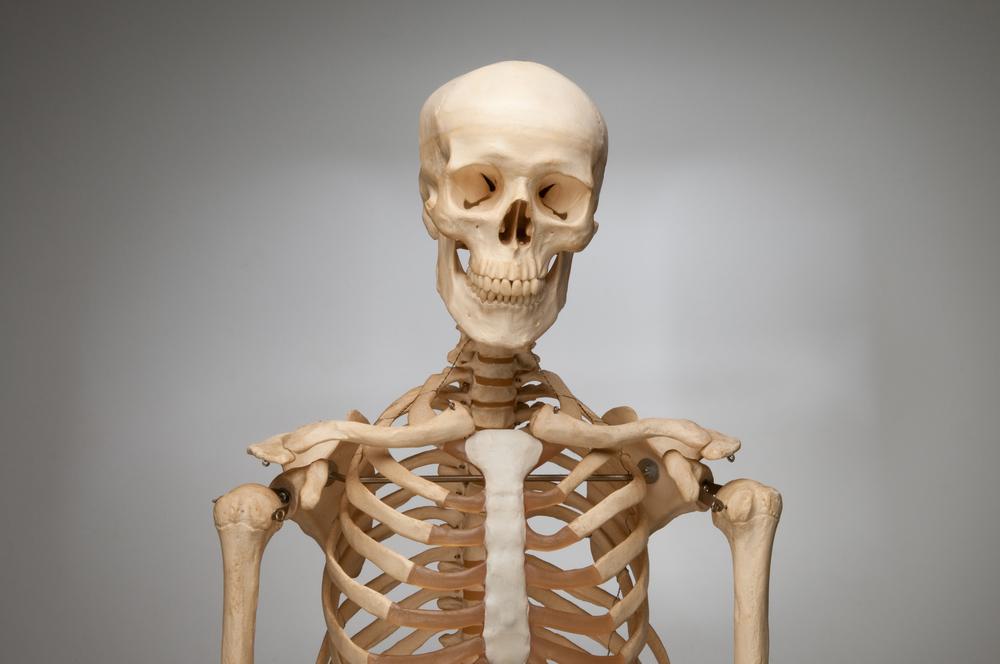 real human bones