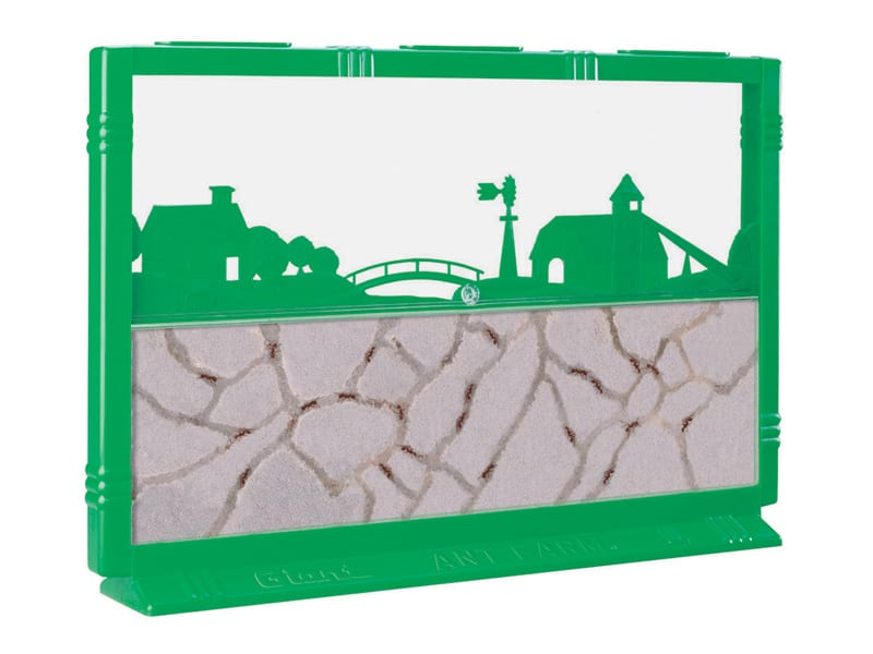 Pets For Busy People ant farm