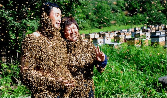 bizarre-wedding-bees