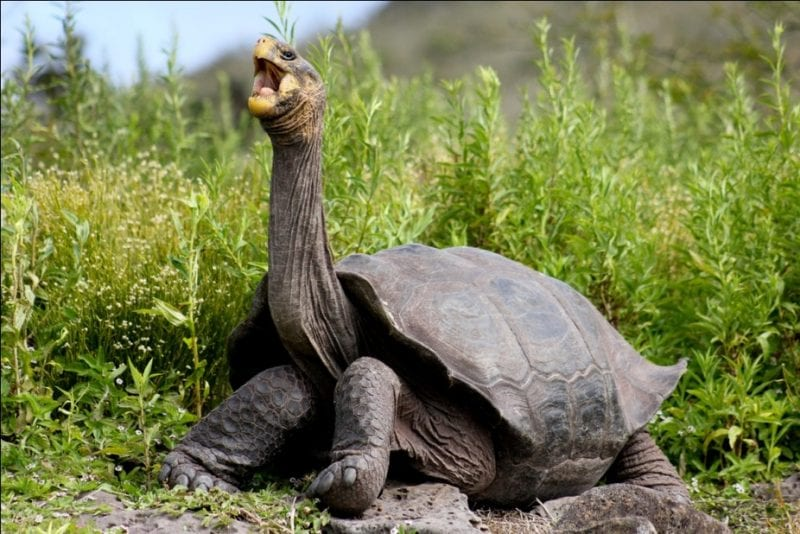 longest lifespan animal tortoise