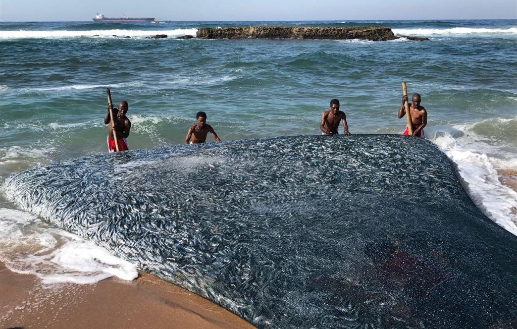 A school of sardine washing up on a beach is another strange thing found on a beach