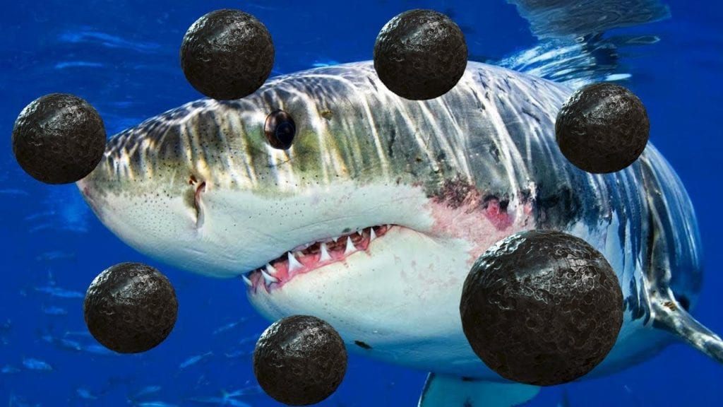Cannon-balls were one of the strange thing found in a Sharks Stomach in the 1830s