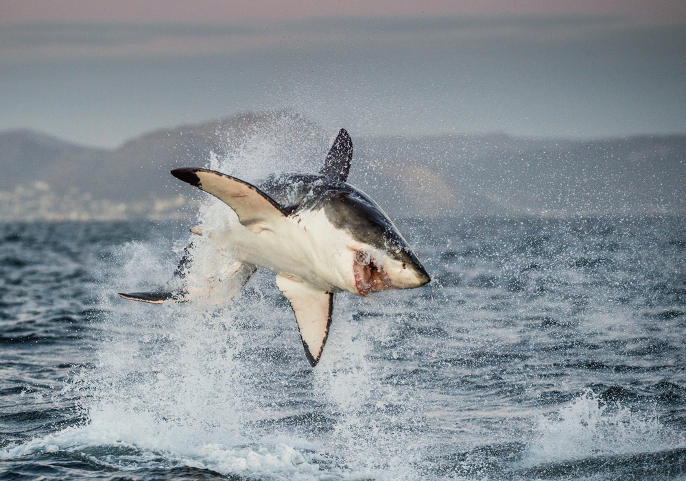 The Top 15 Most Terrifying Shark Attacks