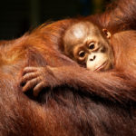 Top 25 Most Endangered Species Humanity Needs to Save Now