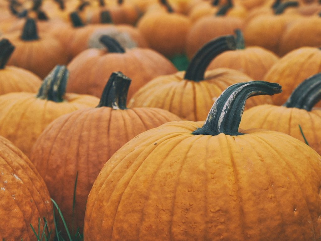Top 5 Pumpkin Spice Goodies You Can Enjoy All Fall