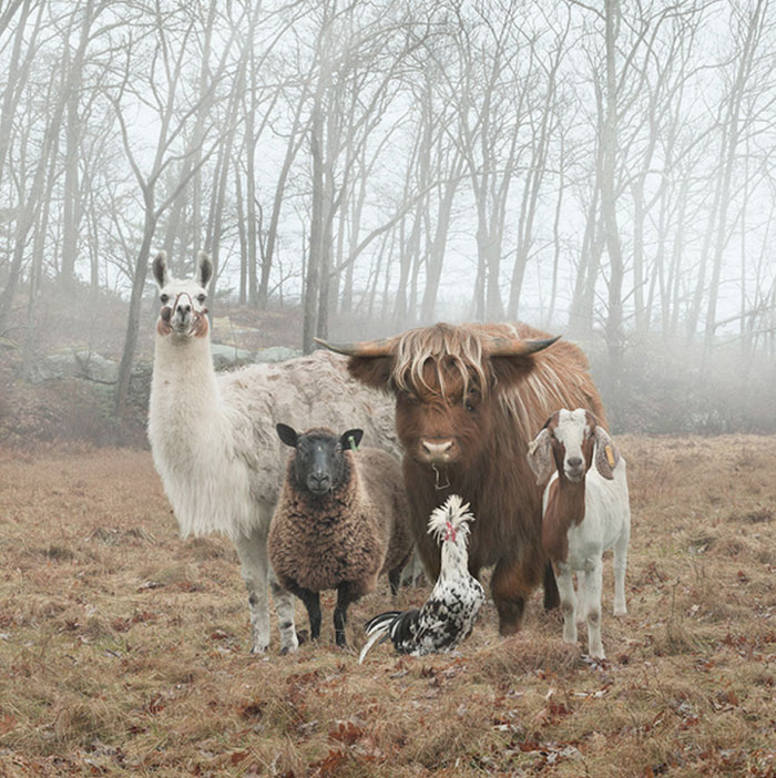 Animal Photoshoots - funny group