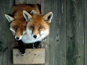 Animal Photoshoots