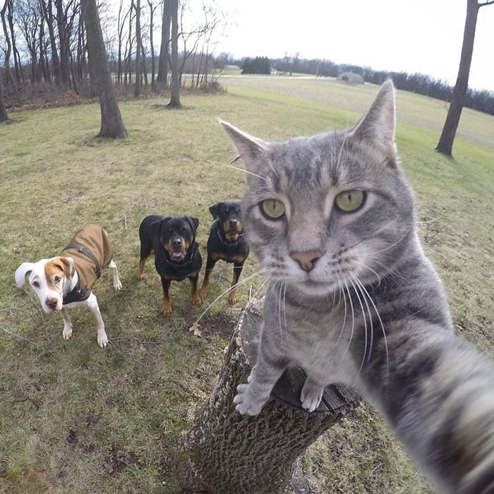 40 Animals That Look Like They're About to Drop the Hottest Album Ever