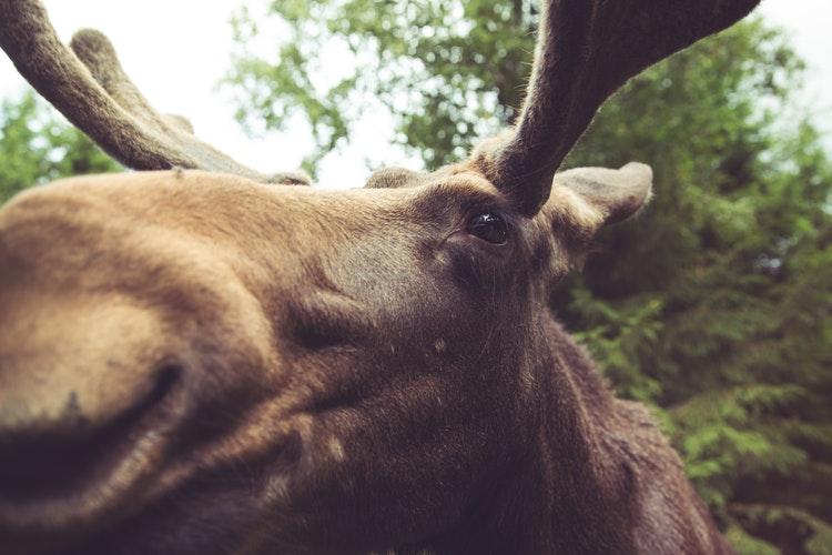Canada Trip Wildlife