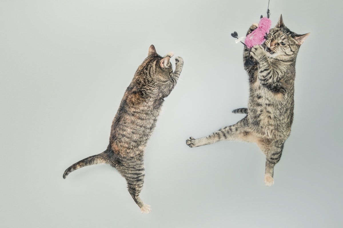 Top10Catnip Toys Your Cat Will Love