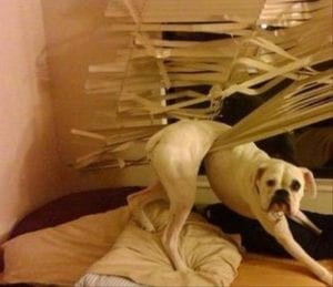 Mondays - stuck in blinds