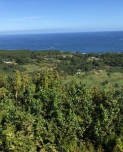 Typical views along the road to Hana.
