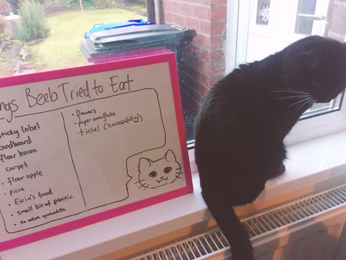 cat-shaming-10