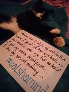 cat-shaming-11