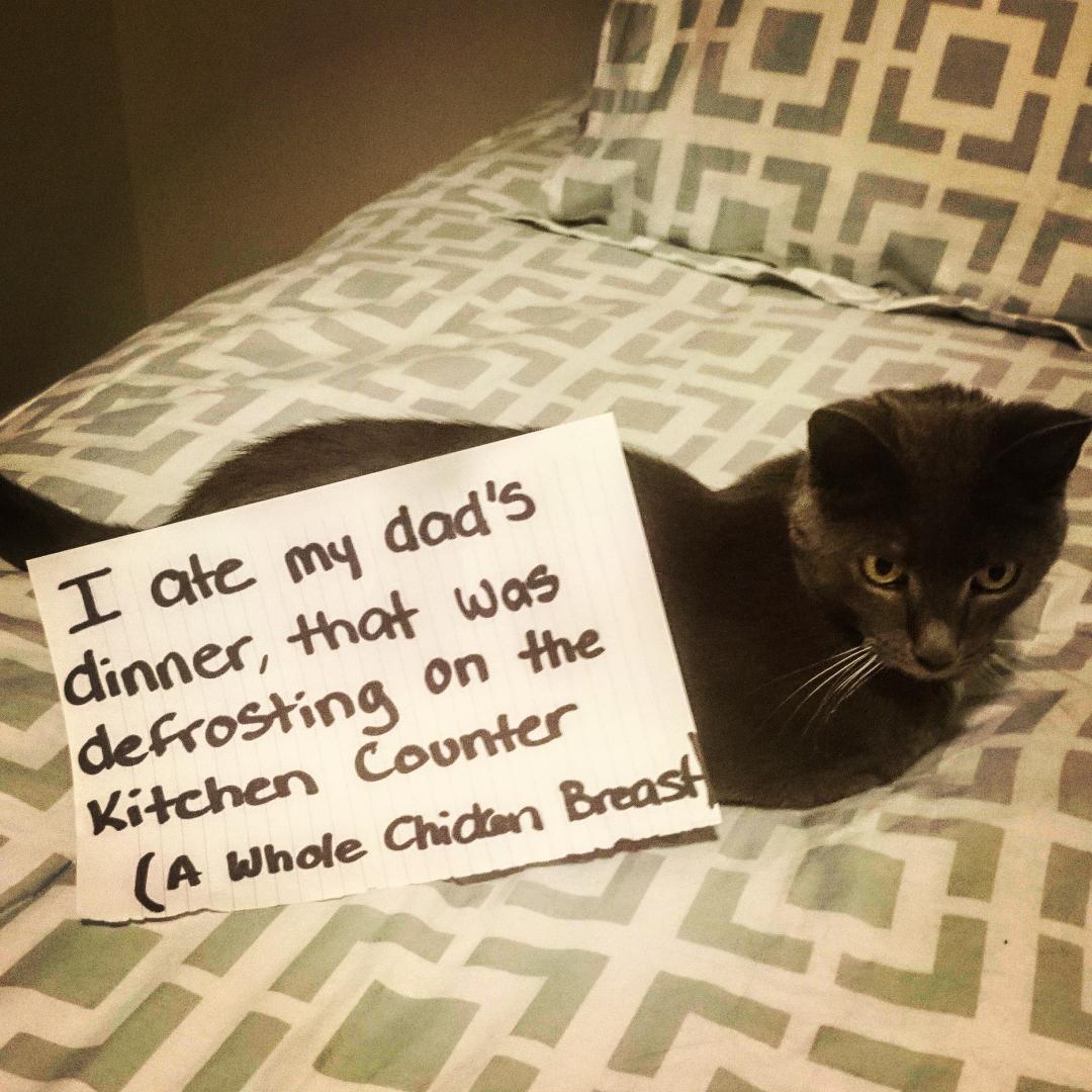 cat-shaming-16