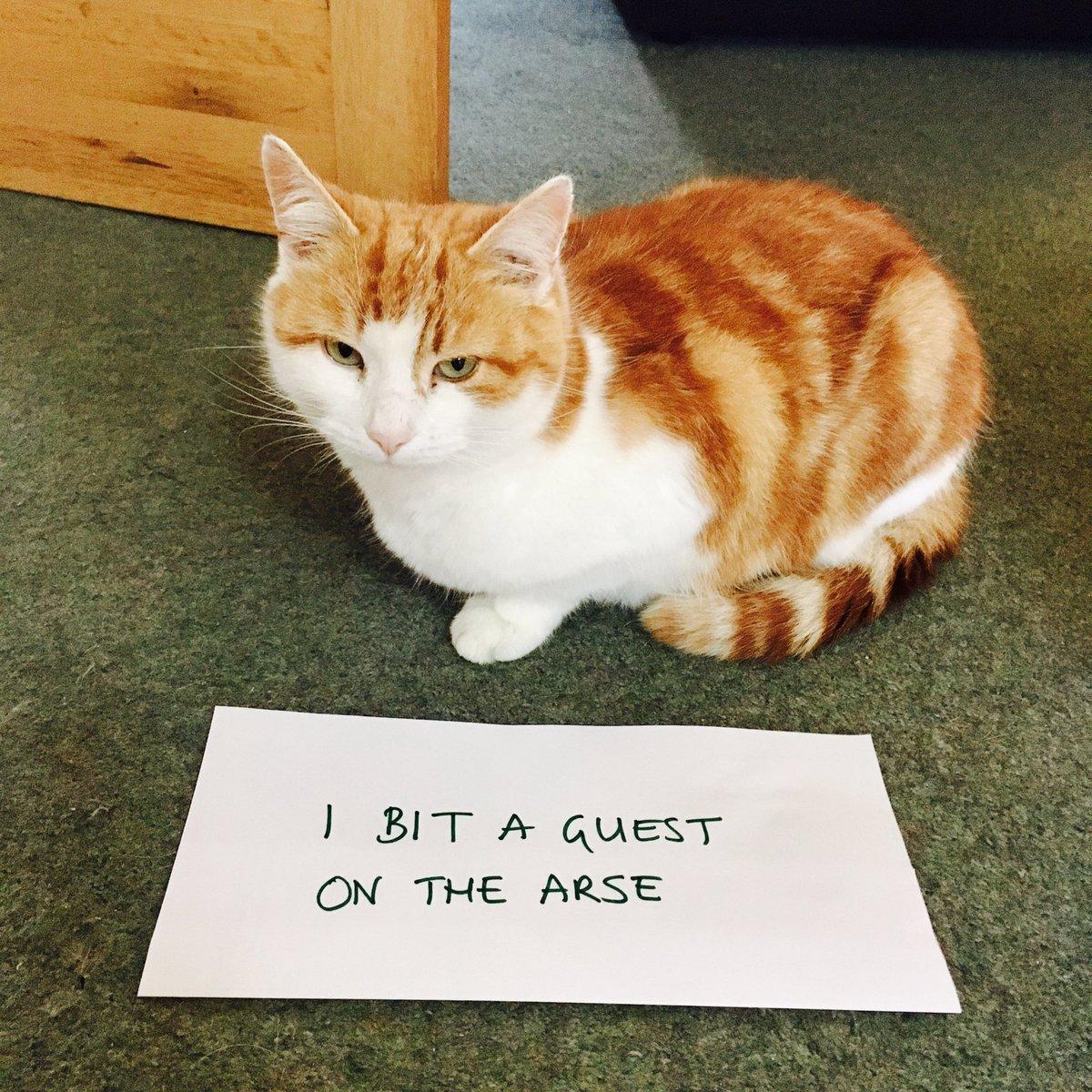 cat-shaming-19