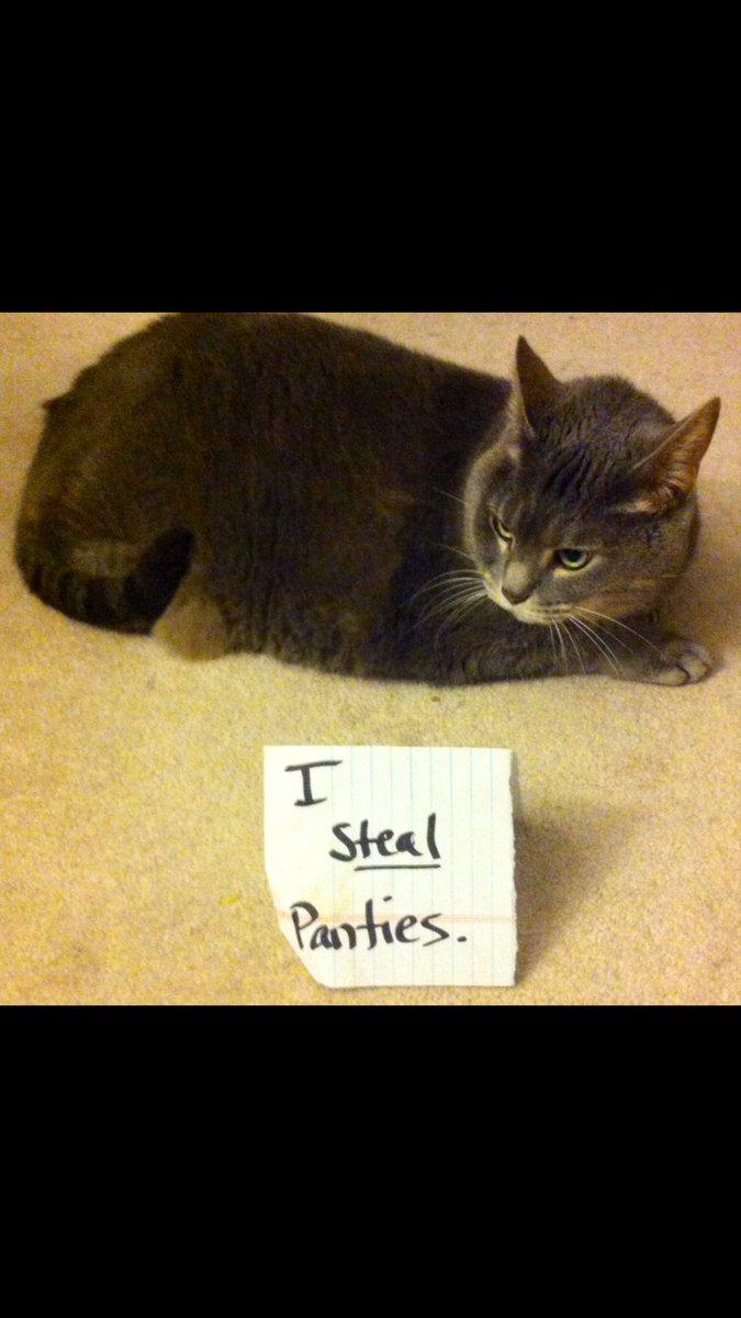 cat-shaming-2