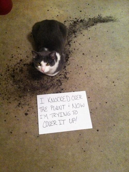cat-shaming-21
