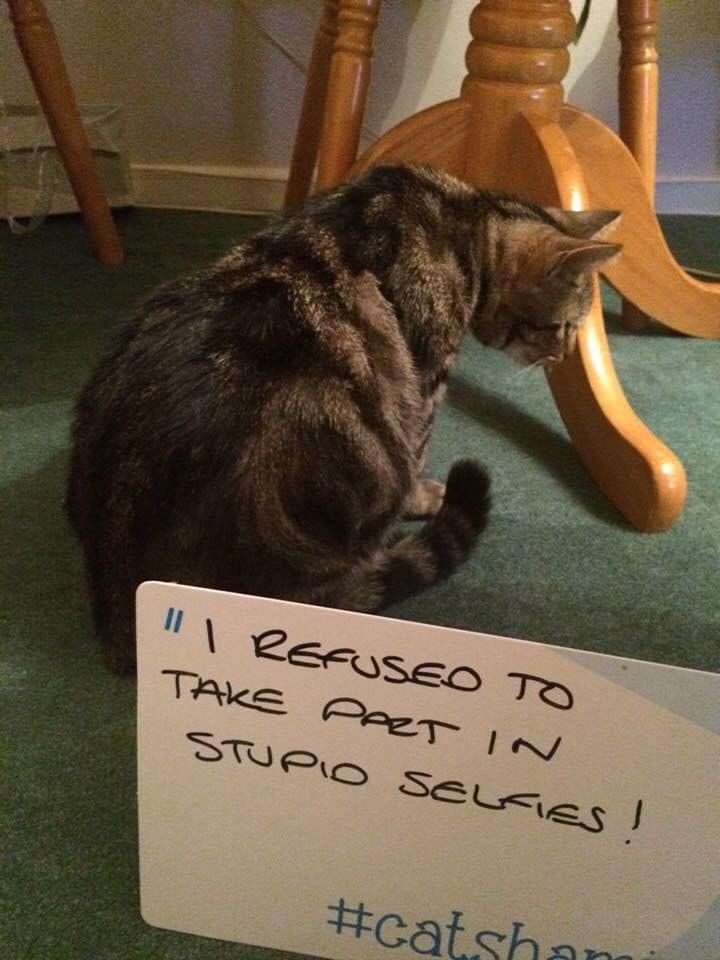 cat-shaming-24