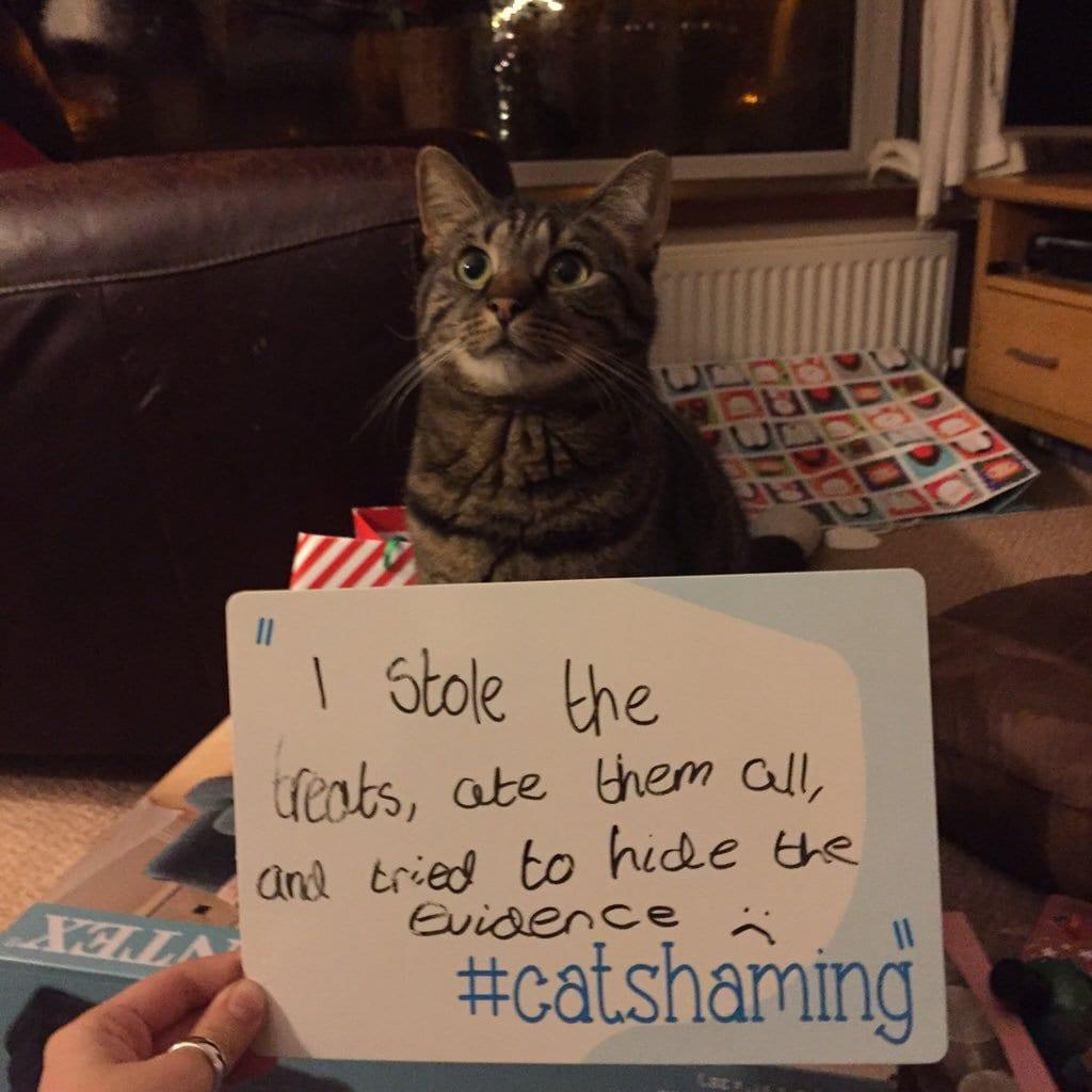 cat-shaming-27