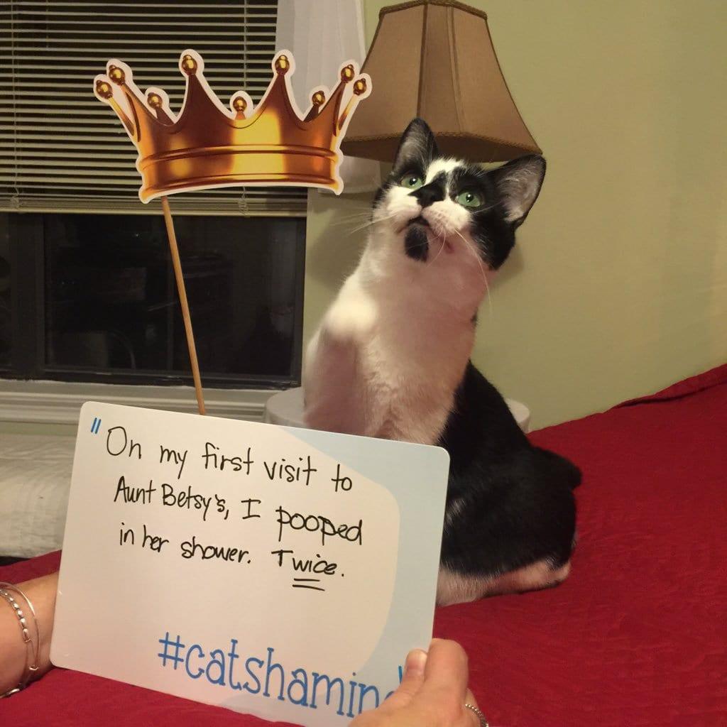 cat-shaming-28