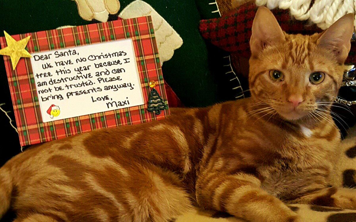 cat-shaming-29