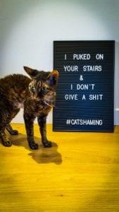 cat-shaming-3