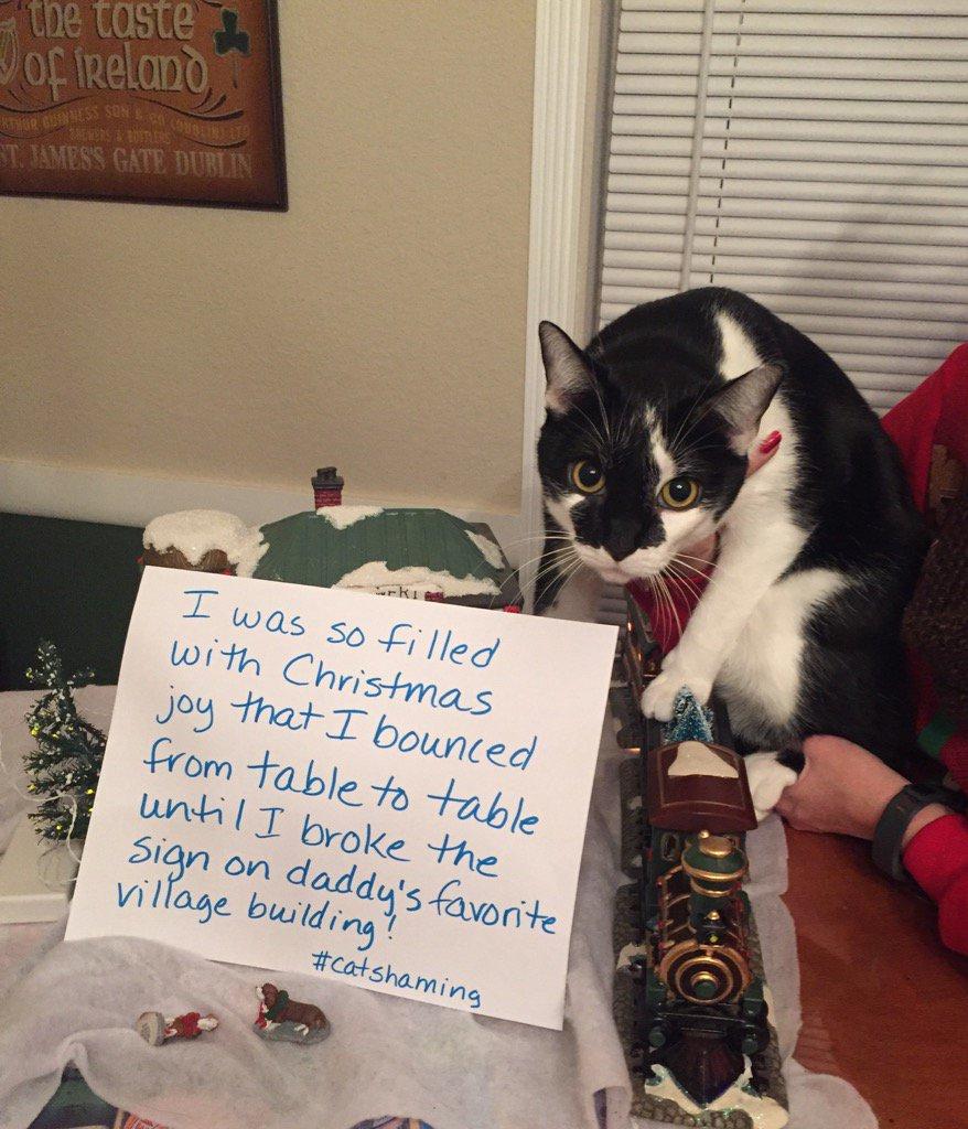 cat-shaming-31