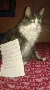cat-shaming-32