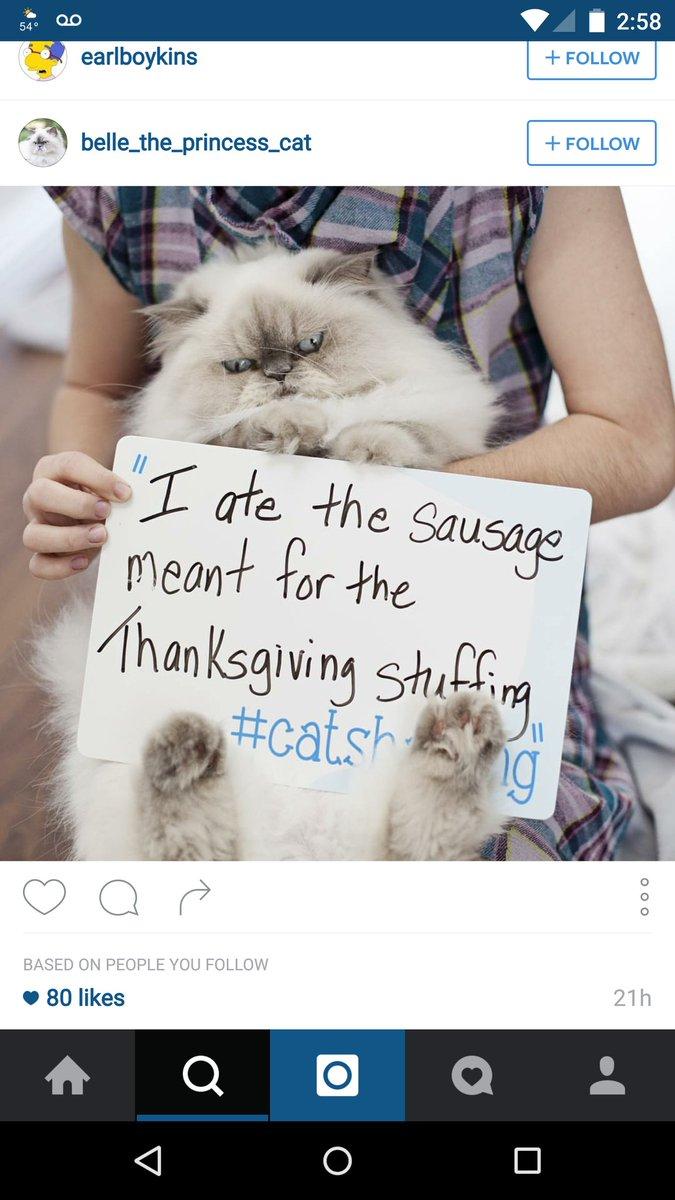 cat-shaming-36