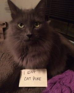 cat-shaming-37